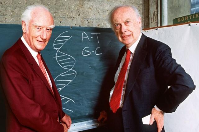 James Watson y Frances Crick proponen la estructura en doble hélice del ADN