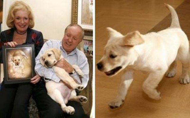 El Proyecto Missyplicity es subsidiado con el objetivo de clonar un perro Missy