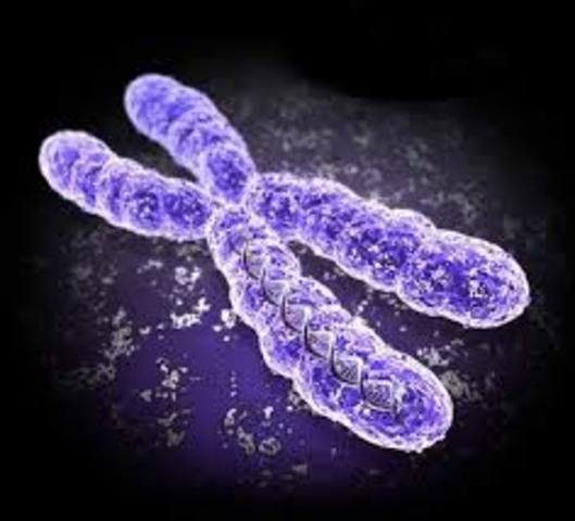 Secuencia completa del primer cromosoma humano, el 22.