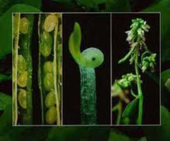 Se completa el primer borrador del genoma de Arabidopsis.