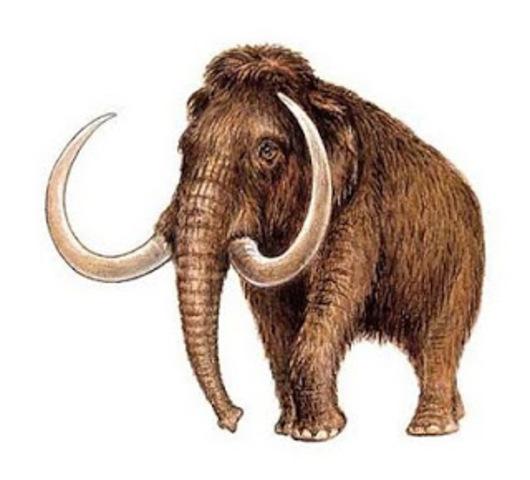Científicos rusos y japoneses esperan reproducir mamuts  a partir de lo que se asumen como patas del animal extinto y descubiertas en la región de Yakutsk al norte de Rusia.