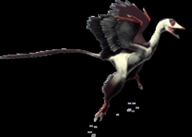 Marsh-Bird Theory