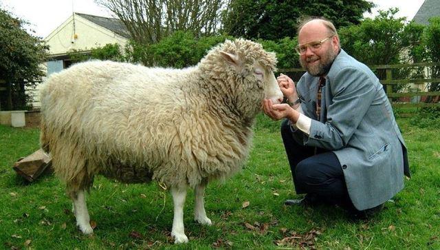 Ian Wilmurt y la oveja Dolly