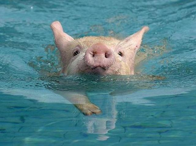 Bay of Pigs Revolution