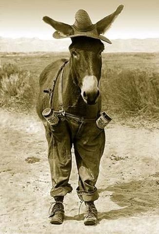 """""""Whoa Mule"""""""