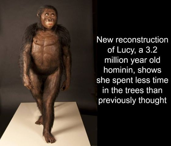 Lucy is Discovered