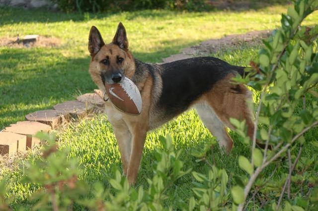 Yo adoptivé mi perro, Nala en 6 de julio dos mil y doce.