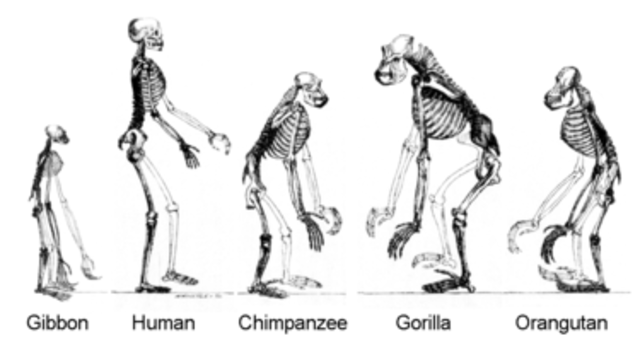 Apes and Hominids Roamed the Earth