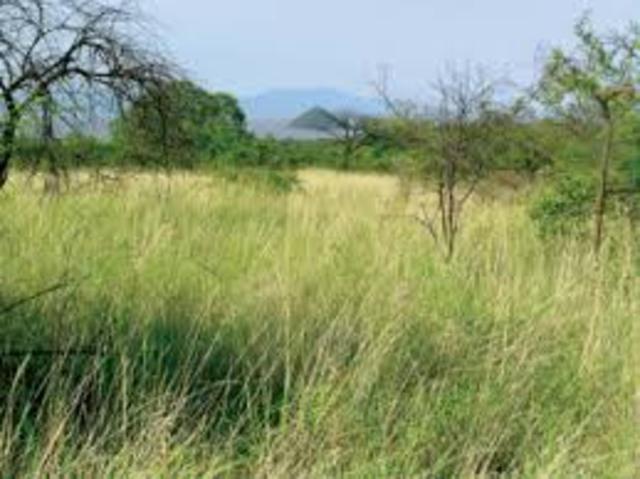 First Appearance of Grasslands