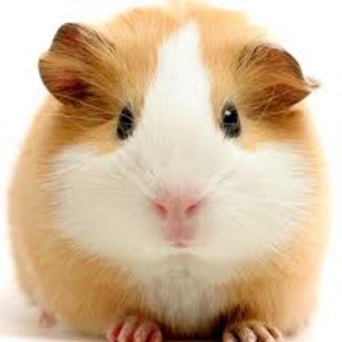 First Pet (Biosocial)