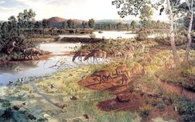 Pliocene Environment