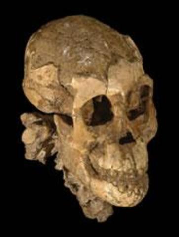 Estudié un Esqueleto en Ethiopia
