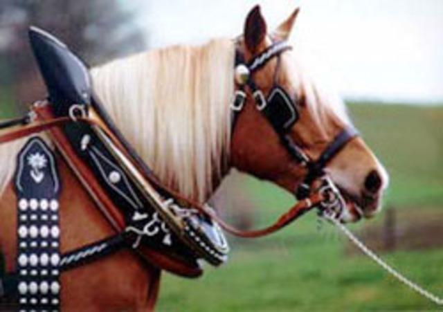 Collar del cavall