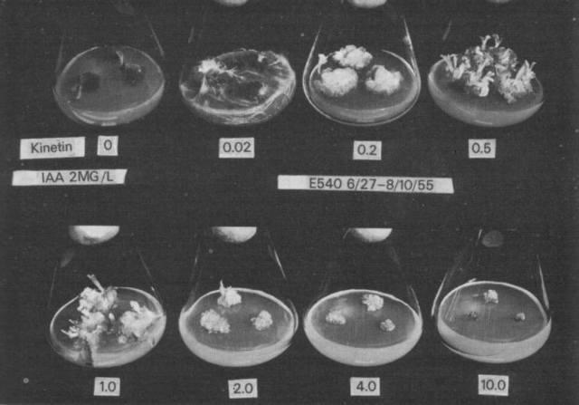 Identificación de la kinetina