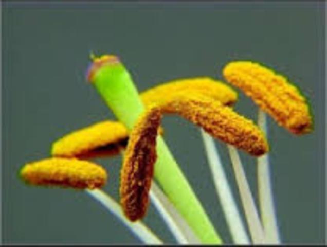Anteras para cultivar polen.