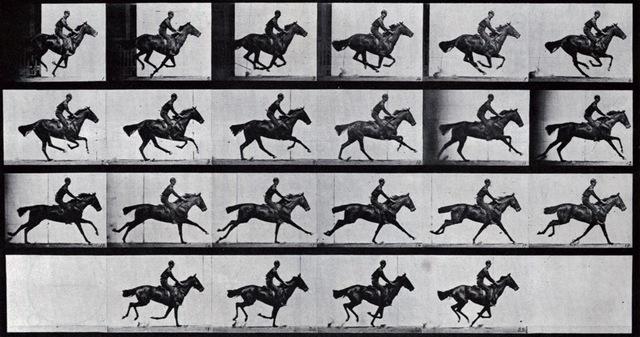 9–46. Eadweard Muybridge, plate published in The Horse in Motion,