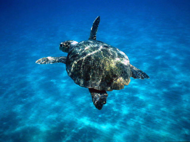 Survival of a lot of species could be endangered by plastic debris.