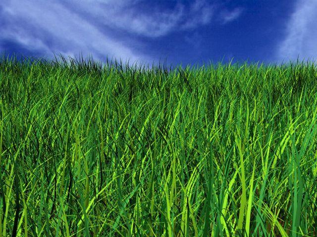 Grass Fight