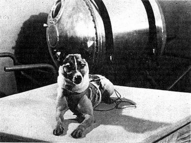 Spoutnik II et la chienne Laîka
