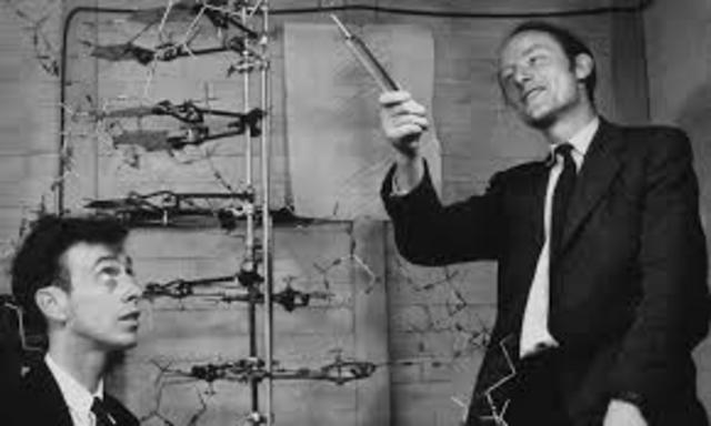 Watson y Crick describen la estructura del ADN.