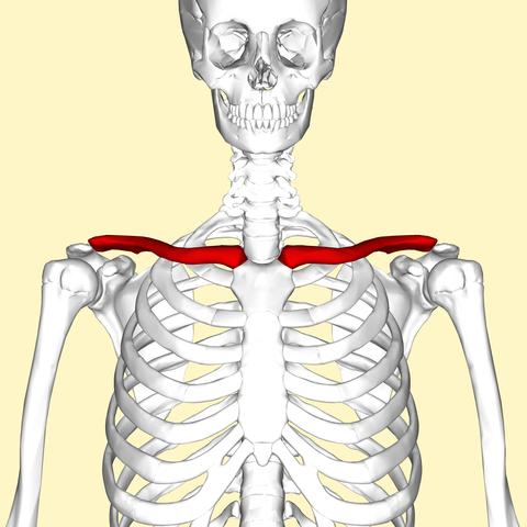 I Broke my Collarbone