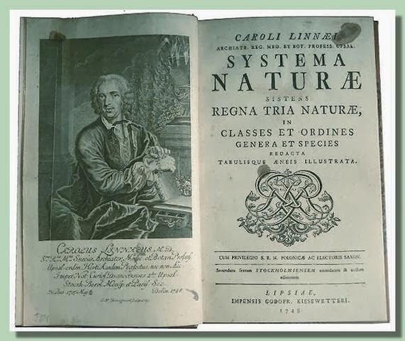La nomenclatura de agave