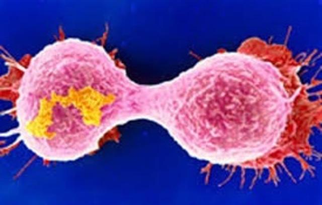 Primer enzima in Vitro