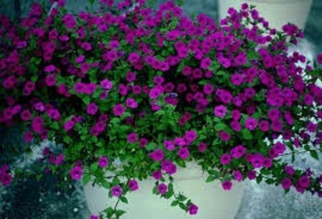 Primera planta completa generada biotecnológicamente