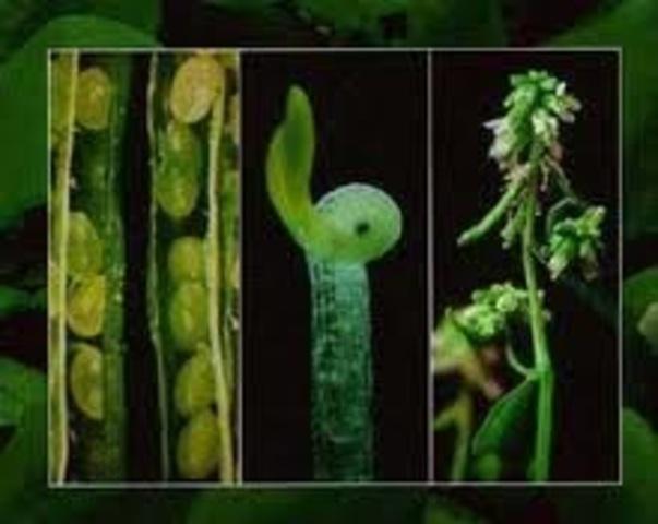 Genoma vegetal