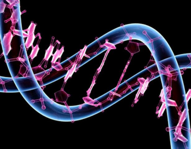 Genoma del insecto