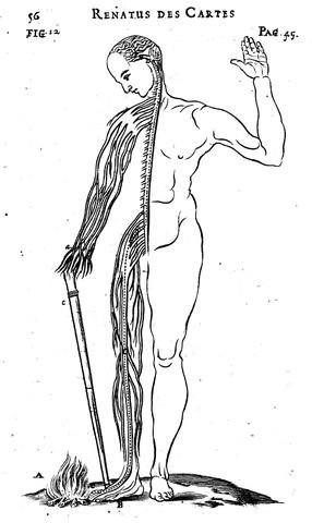 Fisiologìa del cuerpo