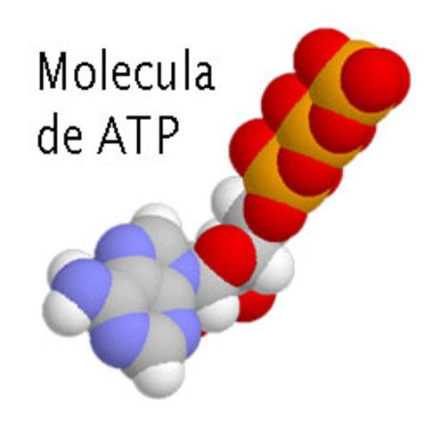 Molecula de ATP