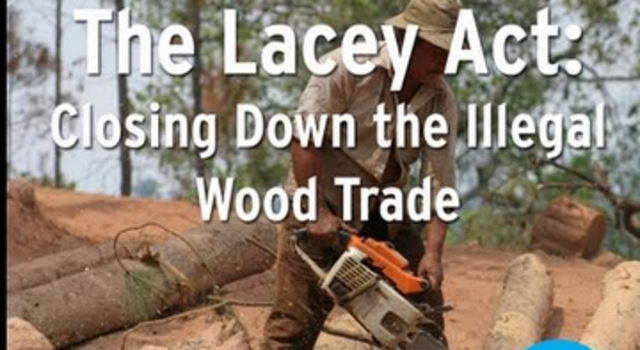 Lacey Act founded