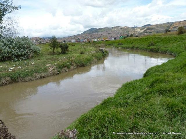 Libélula-Luciérnaga: el nuevo humedal que nace en el río Tunjuelo