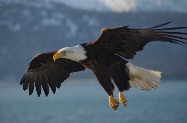 Bald Eagle Preservation Act