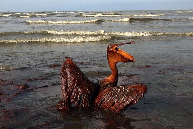 Deep water horizon BP oil spill