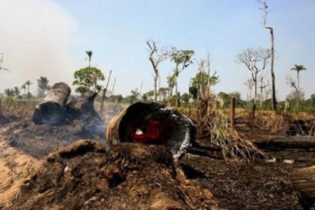 Eccocide in Vietnam