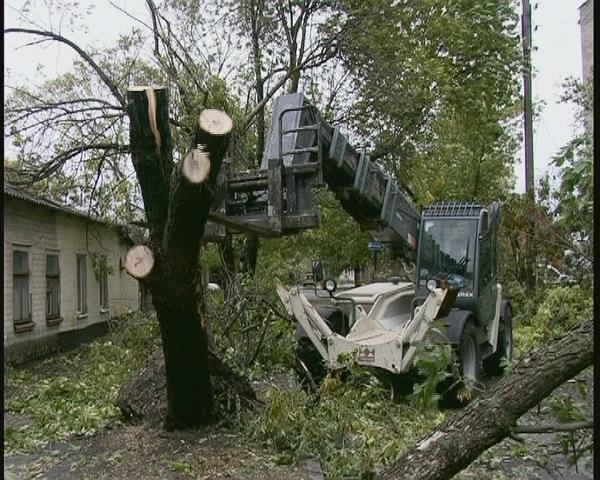 В Бердянске продолжается уборка упавших деревьев