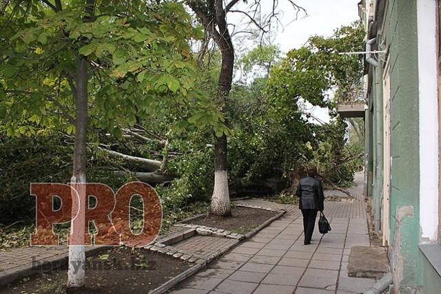 Бердянск снова будет зеленым городом