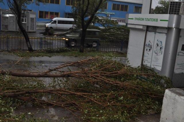 Обитатели ещё одной визитки города — Бердянского зоопарка — перенесли ураган хорошо