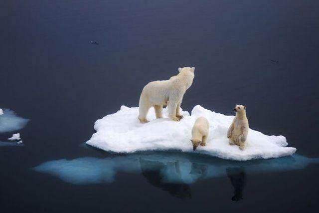 the ecosystem of polar bears