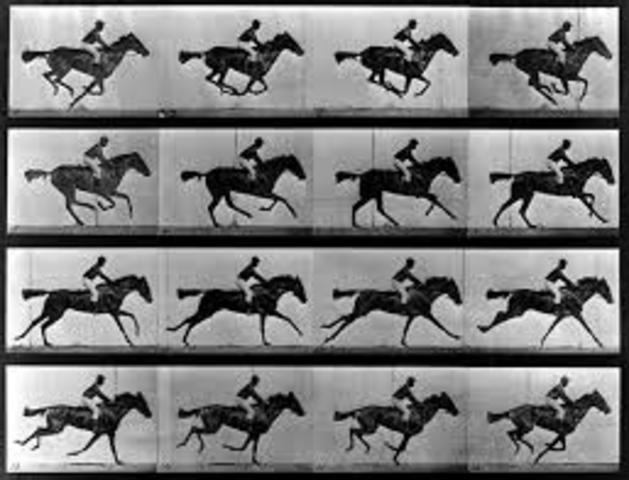 Muybridge: cavall
