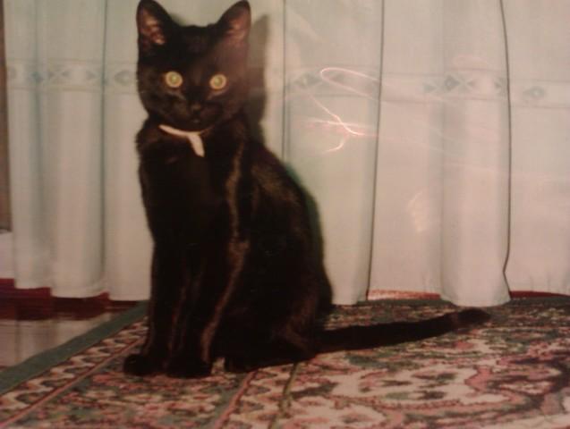 Llegada de mi gato coco a casa