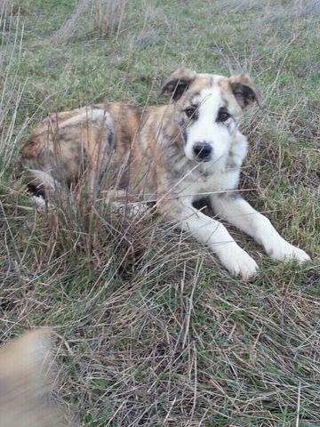 Llega otro miembro más a la familia, mi perro Deymos.