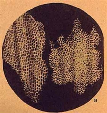 Robert Hooke Invents the Cell
