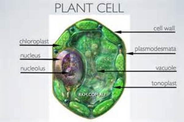 Matthias Schleiden Establishes Plant Cells
