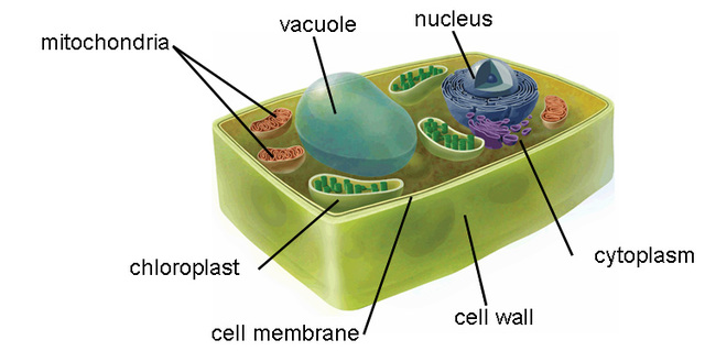 Mathias Shleiden Discovers That Plants Are Made Up Of Cells