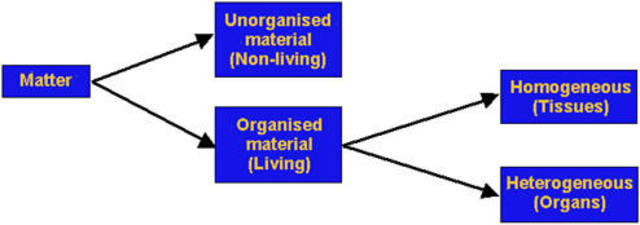 Aristotle Classifies All Living Matter Into Two Categories: Plants and Animals
