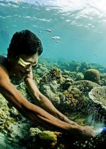 Palauan Challange 2