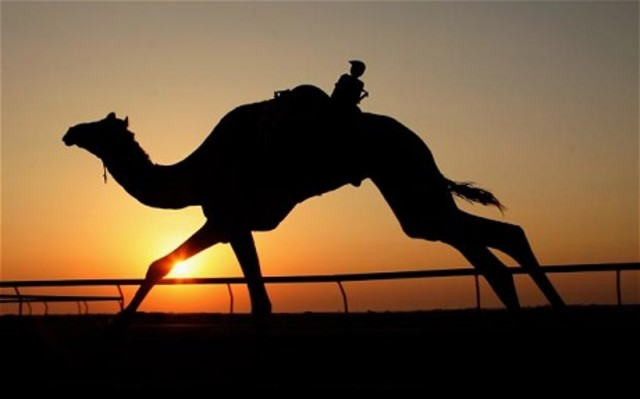 Camels of fire!!! (like chariots of fire....work with me)